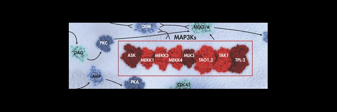 MAP Kinase Signaling